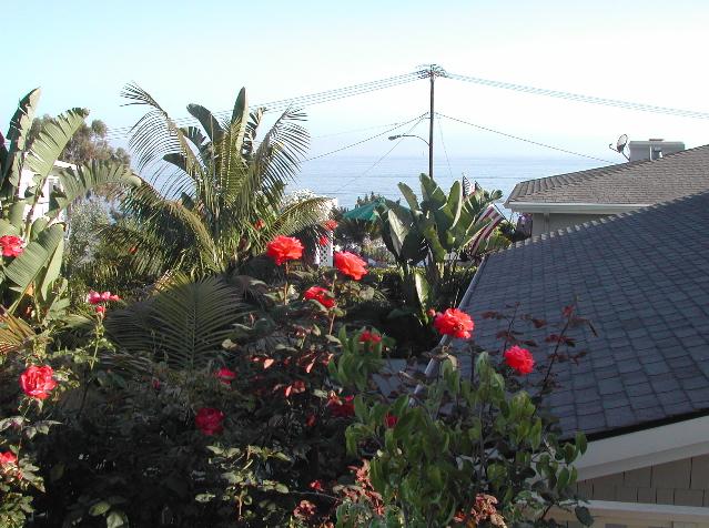 Laguna Roses